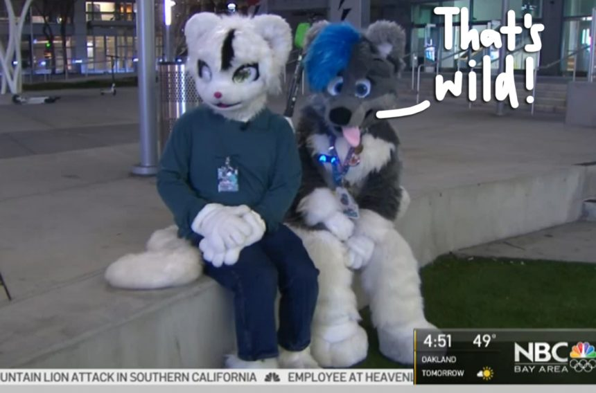 Pack Of Furries Rescue Domestic Violence Victim By Beating Up Her Attacker – Watch! – Perez Hilton